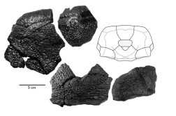Enormous Armored B Rex Fish Fossil Discovered