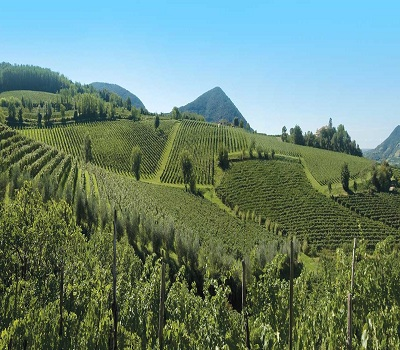 Agricultural Anti-Transpirant Market