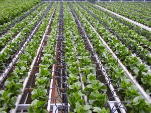 Trickle Irrigation System Market