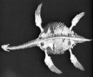 "First Jurassic-Era ""Fish Lizard"" Fossil Found In India"