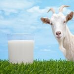 Goat Milk Infant Formula Market