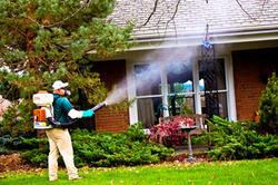 Global Mosquito Control Services Market 2017-2022