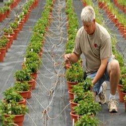 Low-volume Irrigation