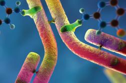 Antibody Drug Conjugate Market