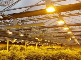 Greenhouse Lights Industry